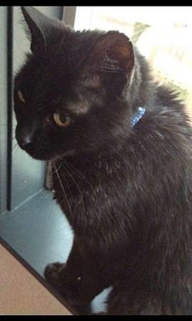 Rockford Resident Needs Help Getting Cat Back [PHOTOS]