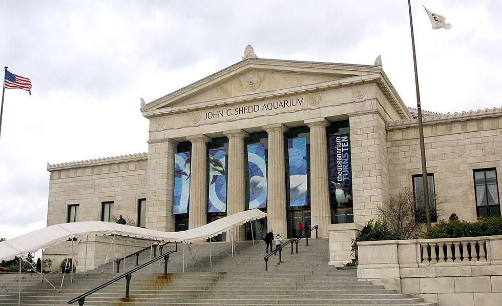 Chicago Museums Will Offer Free