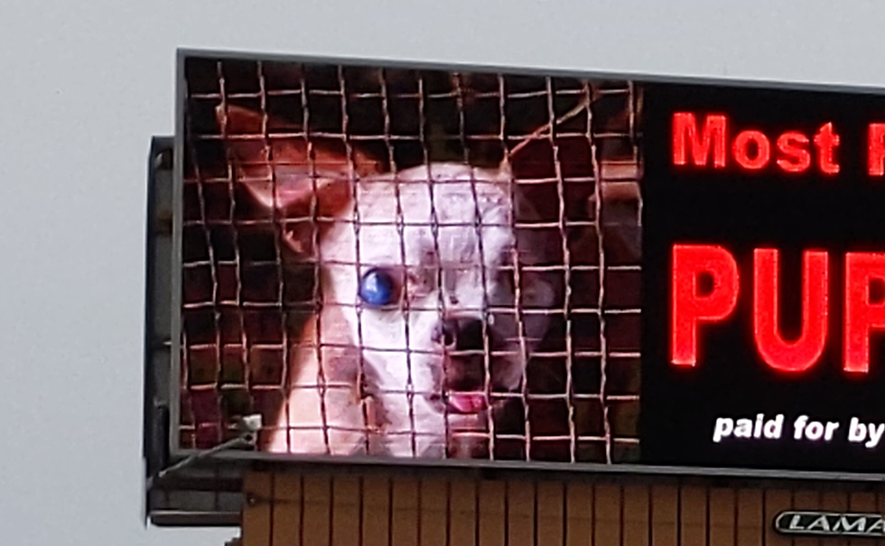 Controversial Puppy Mill Billboard Put Up On Perryville Road