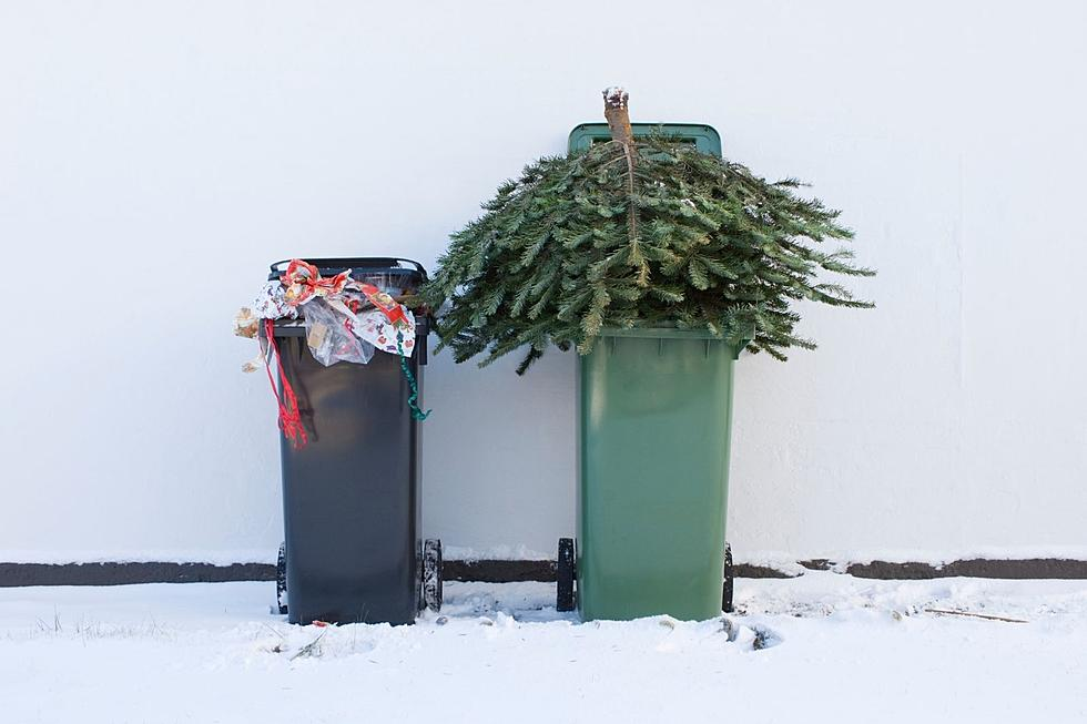 12 Places To Recycle Your Christmas Tree In The Rockford Area