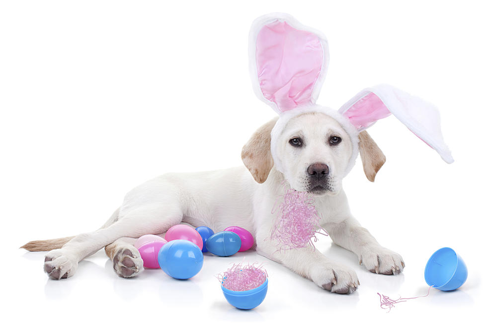 Free Easter Bunny Pet Photos This Weekend At Rockford PetSmart