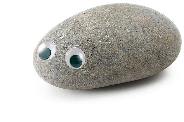 Pet-Rock-12.jpg