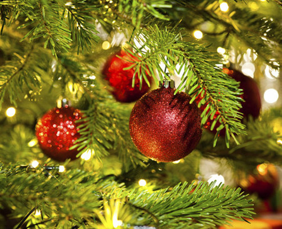 Bugs In Christmas Trees.Your Christmas Tree Could Have Thousands Of Bugs Living In It