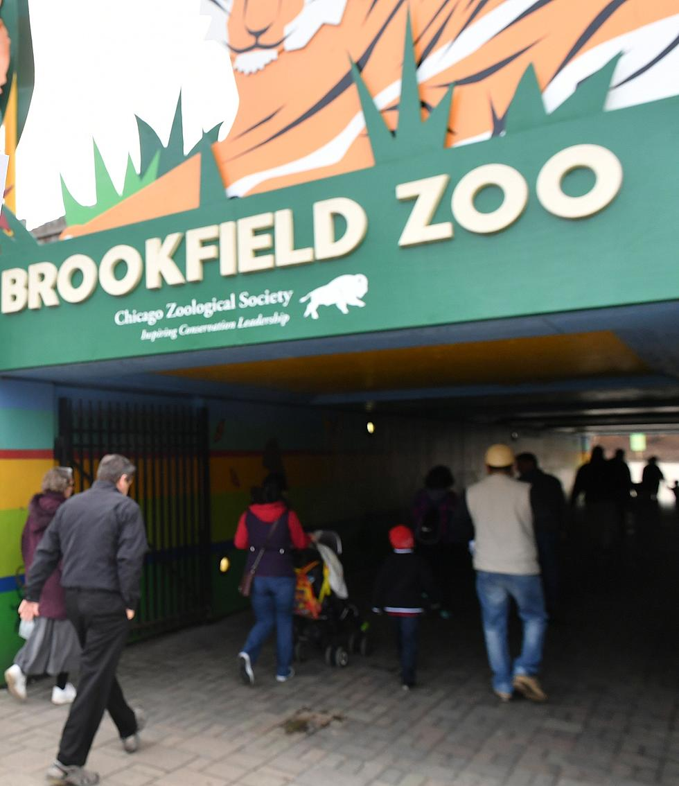 Visit Brookfield Zoo On These Days For The Cost Of Parking