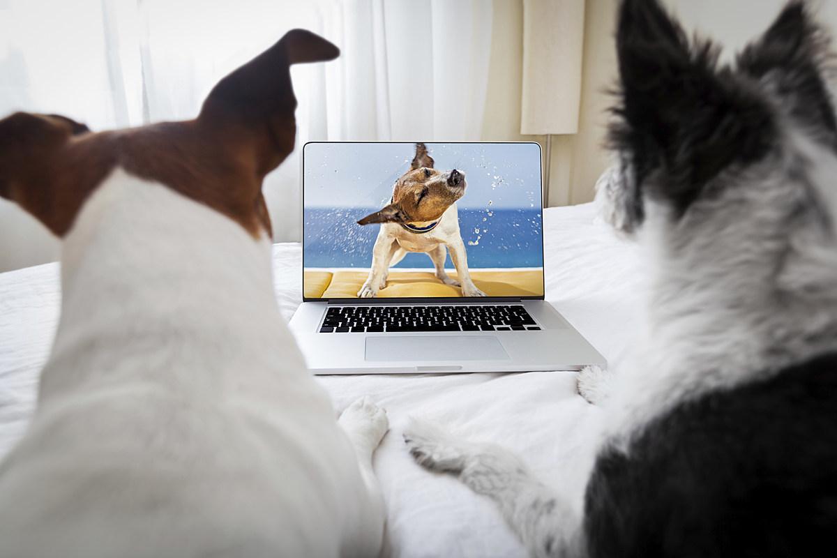 Binge-Watch 10 Disney Dog Movies & Get Paid $1,000