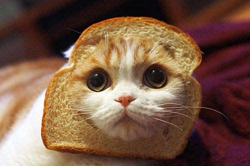 Cat bread