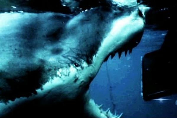 discovery channel shark week app