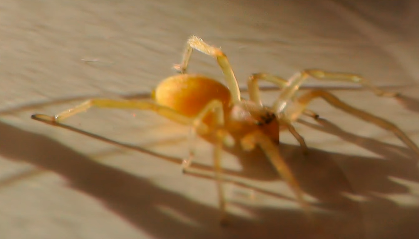 Warning Poisonous Spiders Found In New York