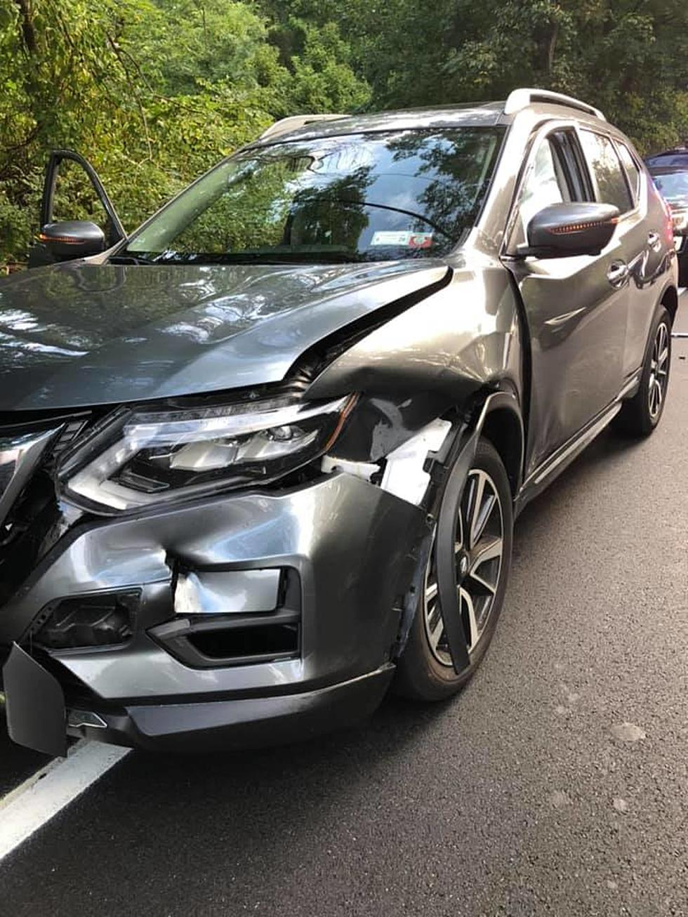 Magnificent Bear Crashes Into Car During Rush Hour In Lower Hudson Valley Download Free Architecture Designs Scobabritishbridgeorg