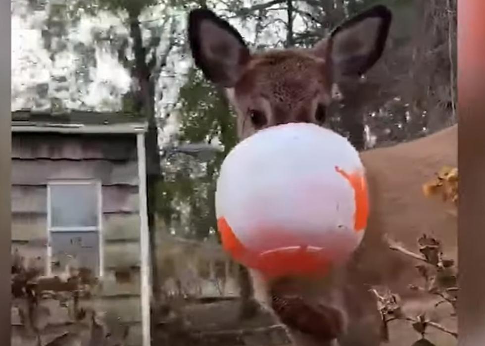 Halloween 2020 Putnamcounty Deer With Halloween Bucket on Head Spotted in Putnam County