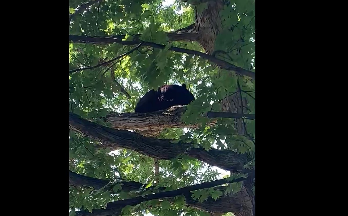 Bear Hangs Out in City Of Poughkeepsie For 3 Hours Near Children