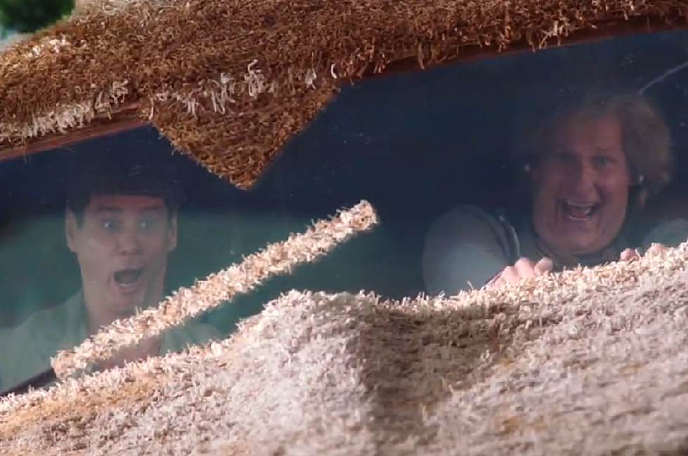 New Trailer for 'Dumb and Dumber To' [VIDEO]