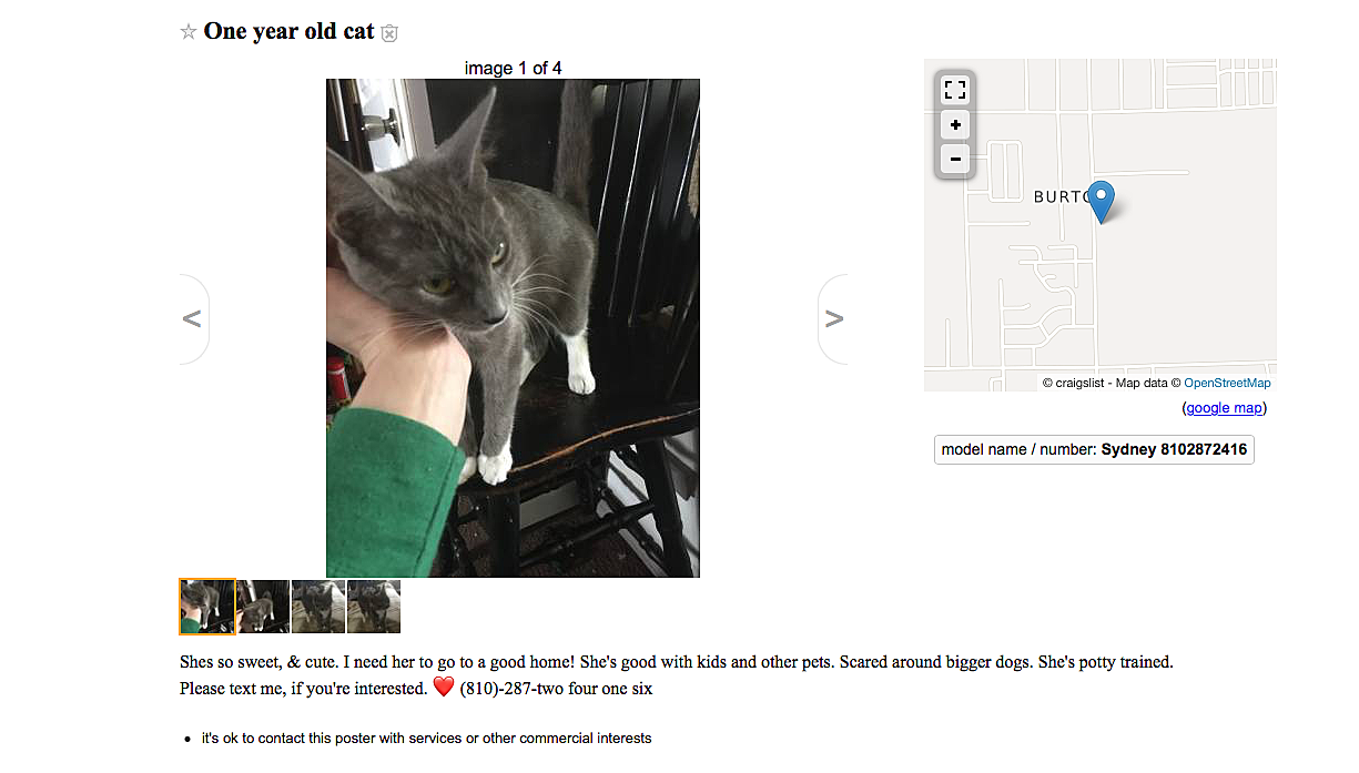The Best of FREE on Flint Craigslist This Week – Cats and Pianos