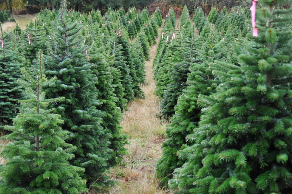Michigan Farms Sending 600 Christmas Trees To Military Families