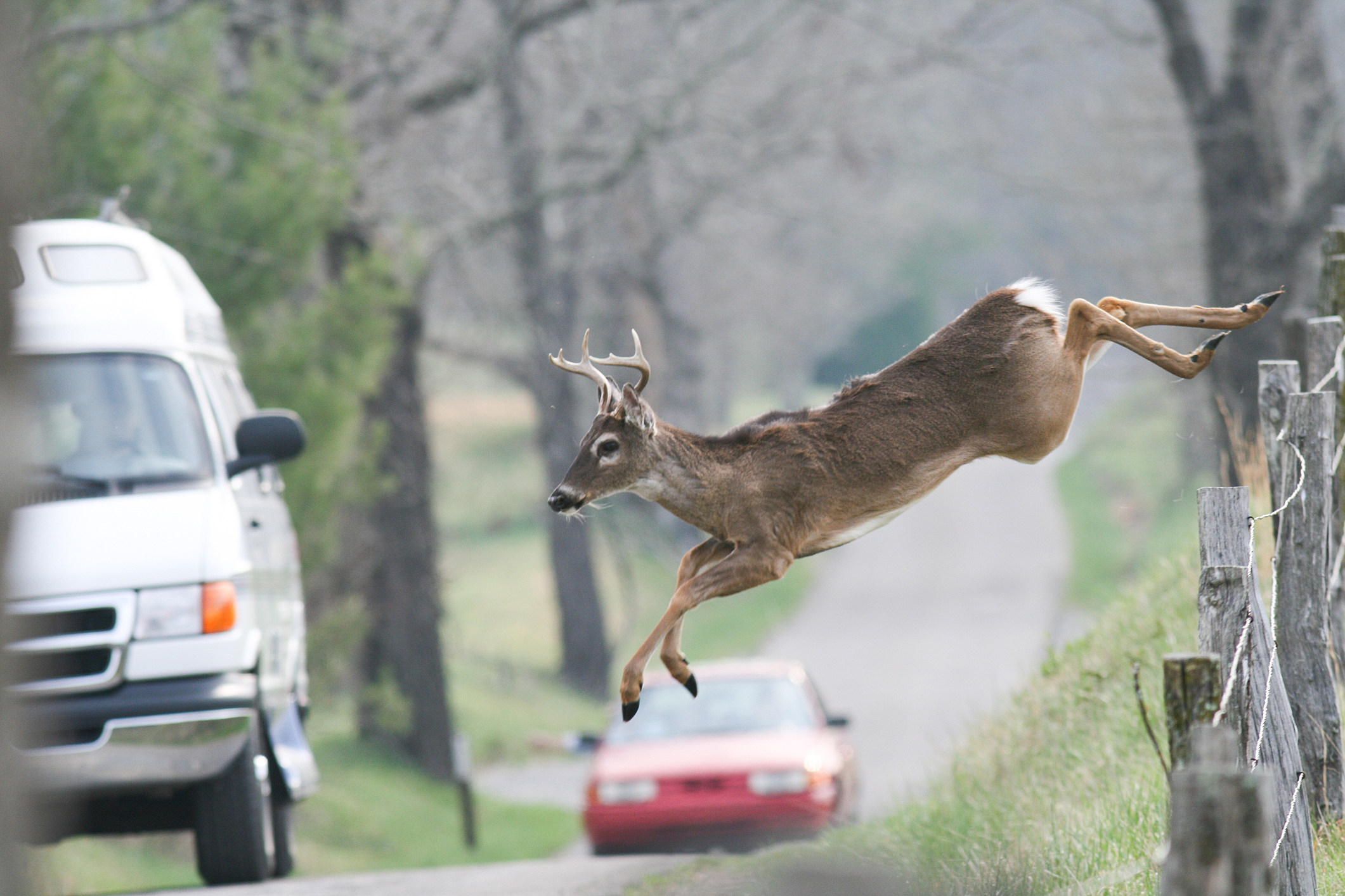 Deer Plays Drum Fill From In The Air Tonight