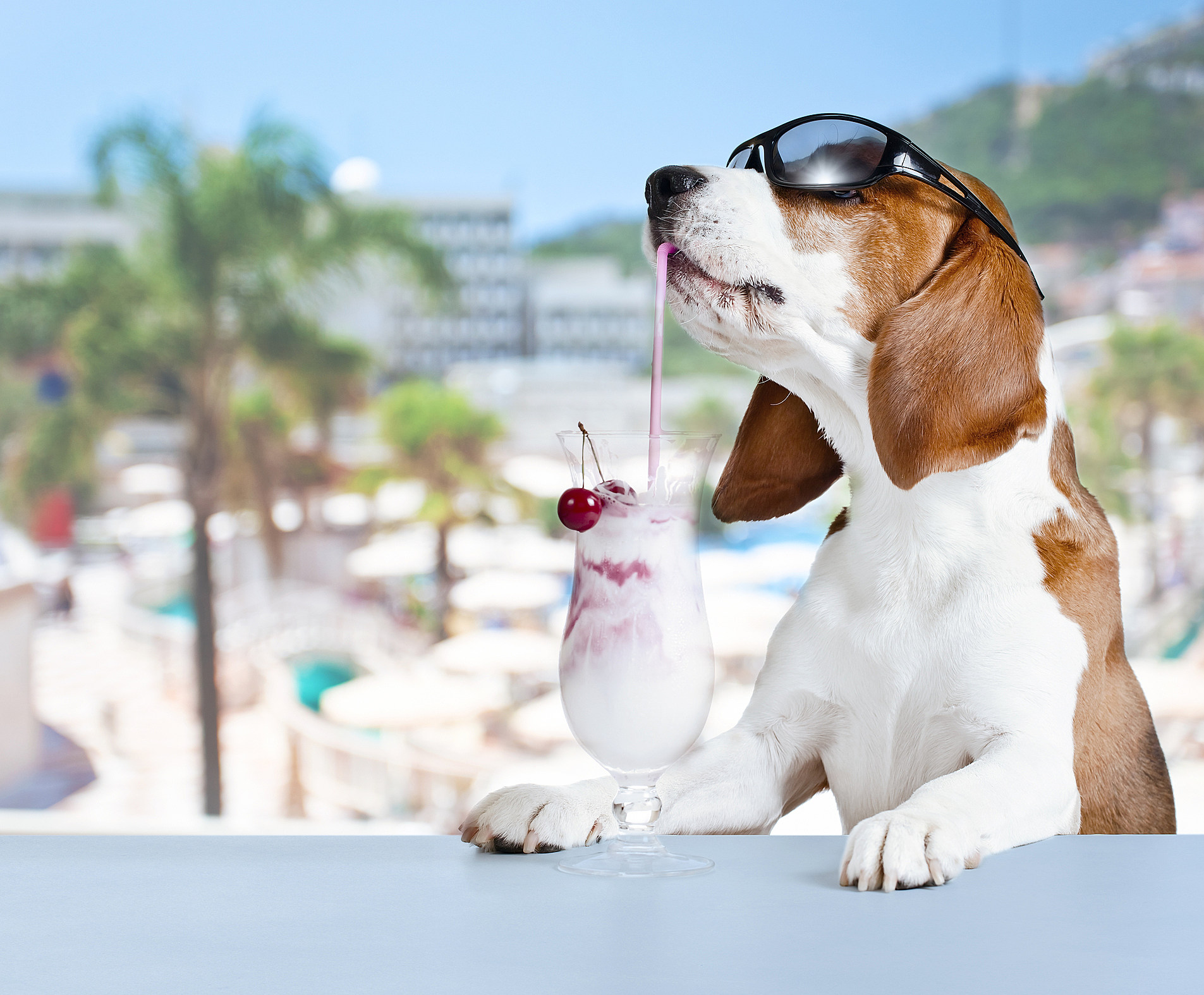 6e1aebc2f New Jersey Has One of America s Most Dog-Friendly Cities
