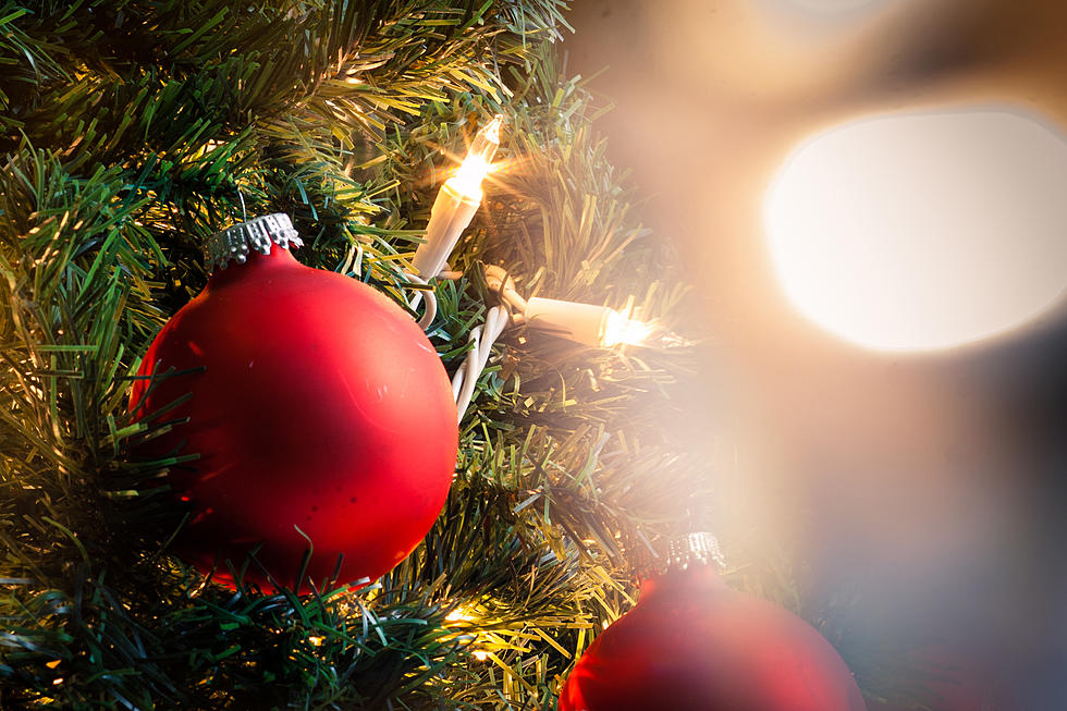 The Best Local Places To Cut Down A Xmas Tree