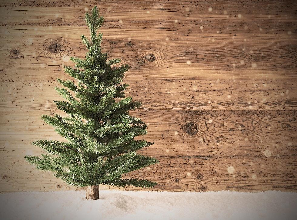 Christmas Tree Shortage.There Is A Christmas Tree Shortage In Nj Here S Why