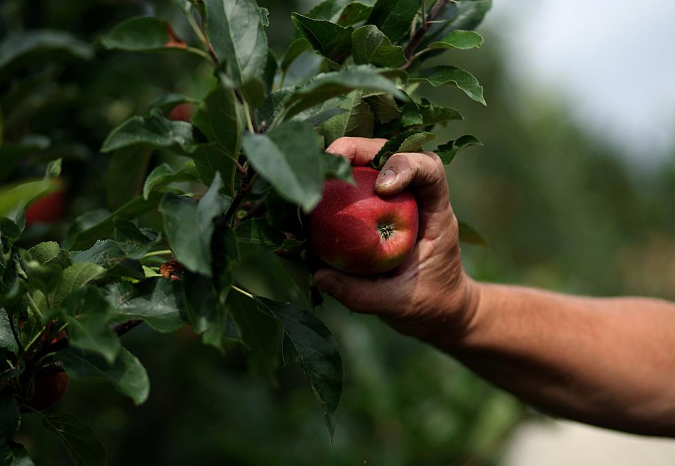 Best Places To Go Apple Picking In Nj