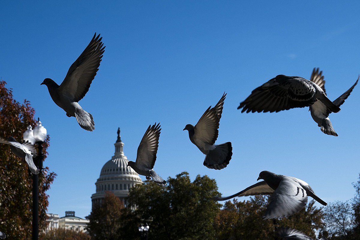 Bird Bombs Set Off in Trenton Today - 94.5 PST