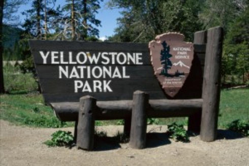 German Man Banned from Yellowstone Because of Drone
