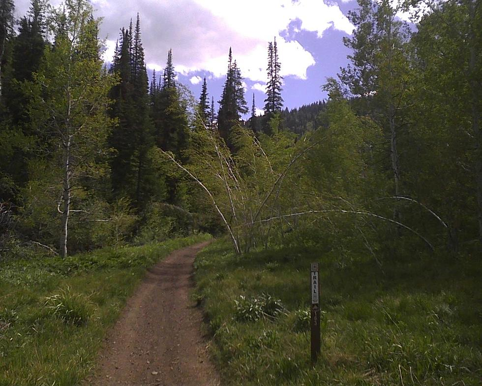 Map Tools Available to Get Around in Idaho Forests on ketchum idaho road map, meridian idaho road map, big wood river idaho road map, boise idaho road map, warm lake idaho road map, ada county idaho road map, mccall idaho road map,