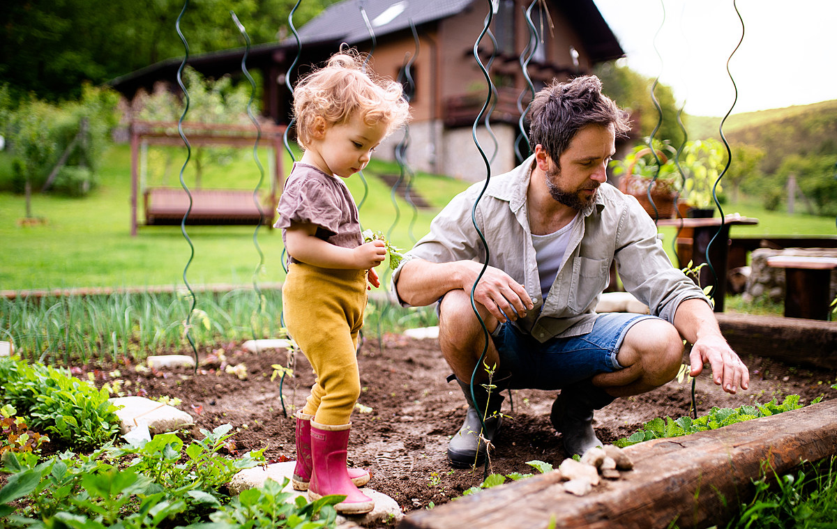 Your Complete Guide to Growing a Successful Vegetable Garden