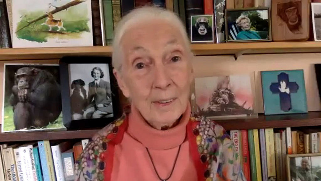 "Jane Goodall Says ""The Difference Would be Huge"" If We Gave Up Me"