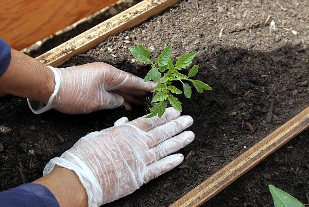 Celebrate World Naked Gardening Day on Saturday, May 6